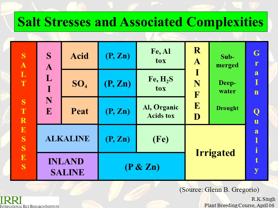 R.K.Singh Plant Breeding Course, April 06 Basic Concepts – Genotype vs.