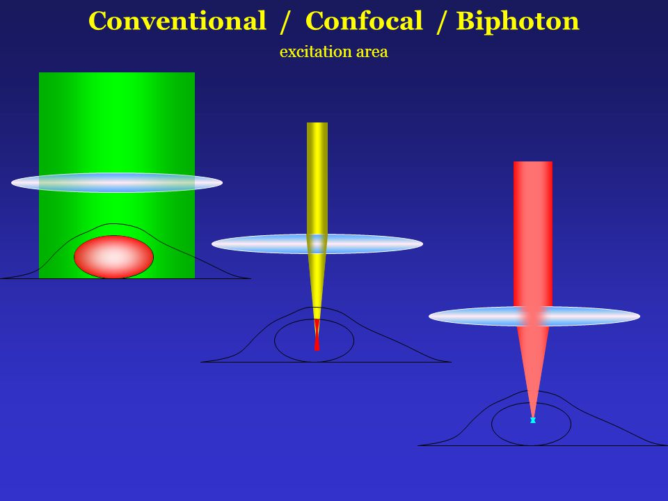 Conventional / Confocal / Biphoton excitation area