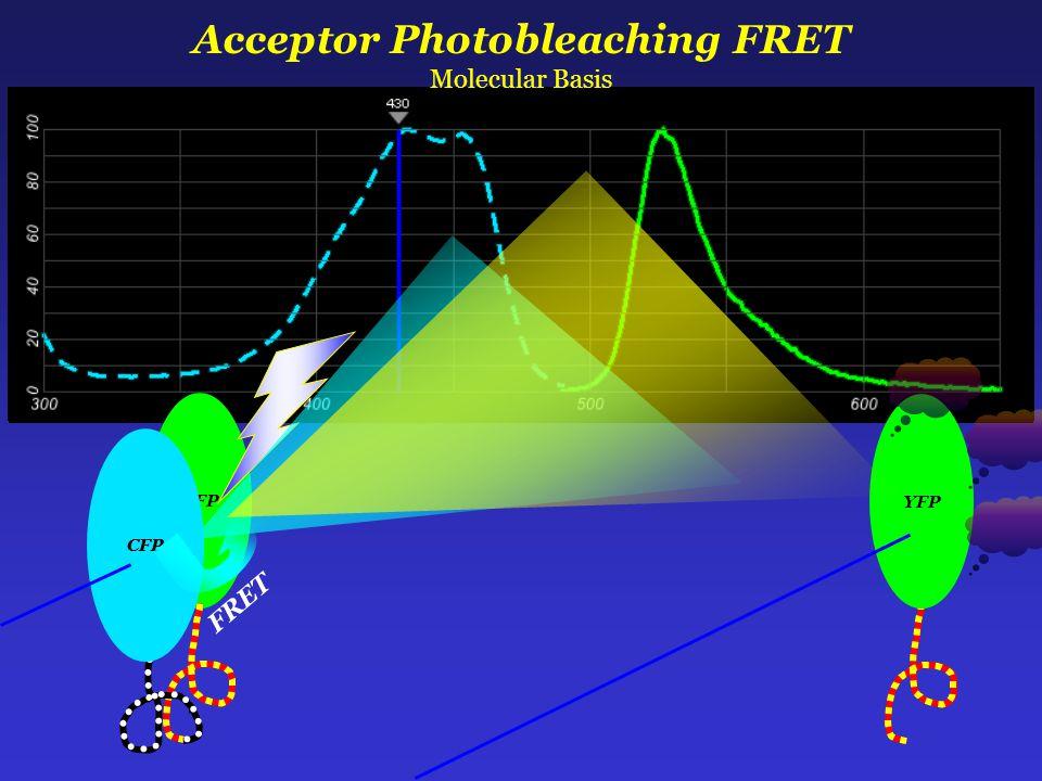 YFP CFP FRET Acceptor Photobleaching FRET Molecular Basis