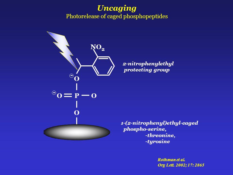 Uncaging Photorelease of caged phosphopeptides 2-nitrophenylethyl protecting group NO 2 1-(2-nitrophenyl)ethyl-caged phospho-serine, -threonine, -tyrosine - P O O OO - Rothman et al.