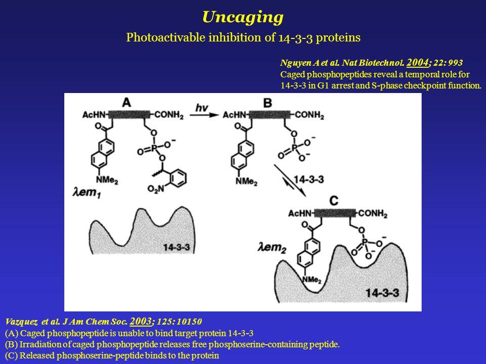 Uncaging Photoactivable inhibition of 14-3-3 proteins Vazquez et al.