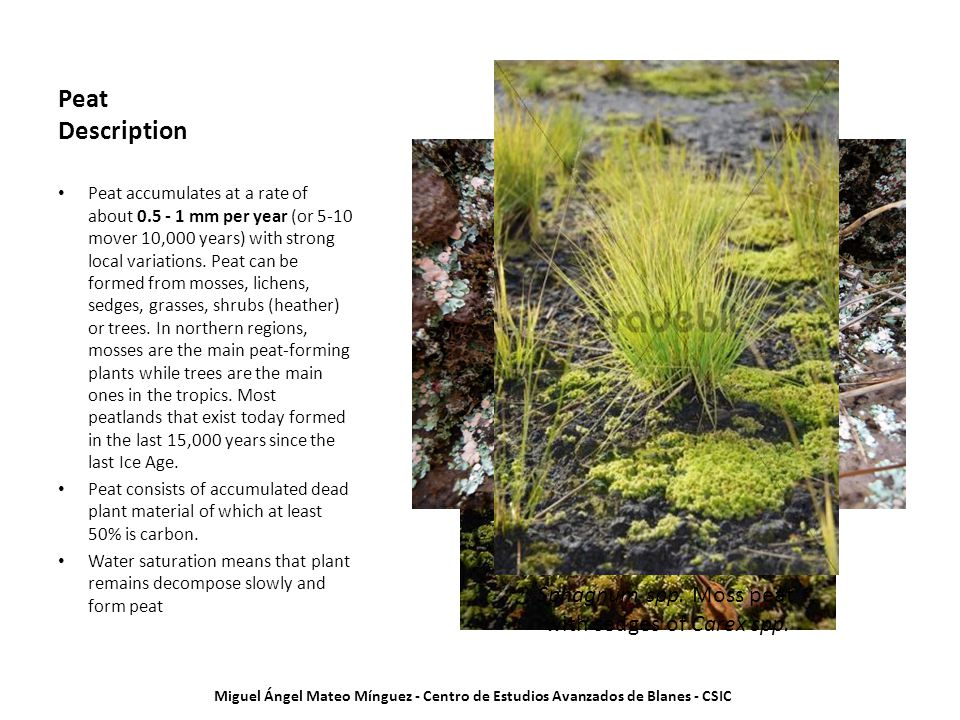 Peat Description Peat accumulates at a rate of about 0.5 - 1 mm per year (or 5-10 mover 10,000 years) with strong local variations.