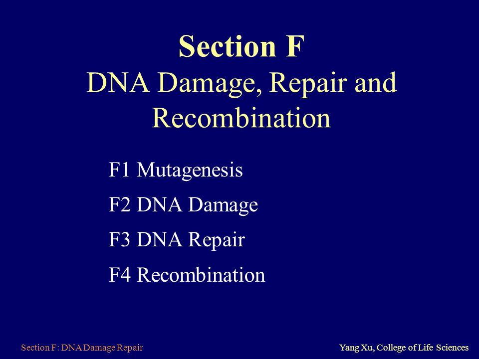 Section F: DNA Damage RepairYang Xu, College of Life Sciences Section F DNA Damage, Repair and Recombination F1 Mutagenesis F2 DNA Damage F3 DNA Repai