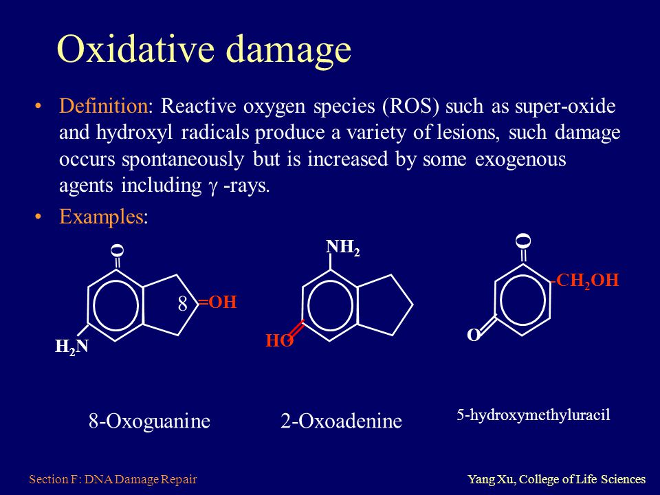 Section F: DNA Damage RepairYang Xu, College of Life Sciences Oxidative damage Definition: Reactive oxygen species (ROS) such as super-oxide and hydro