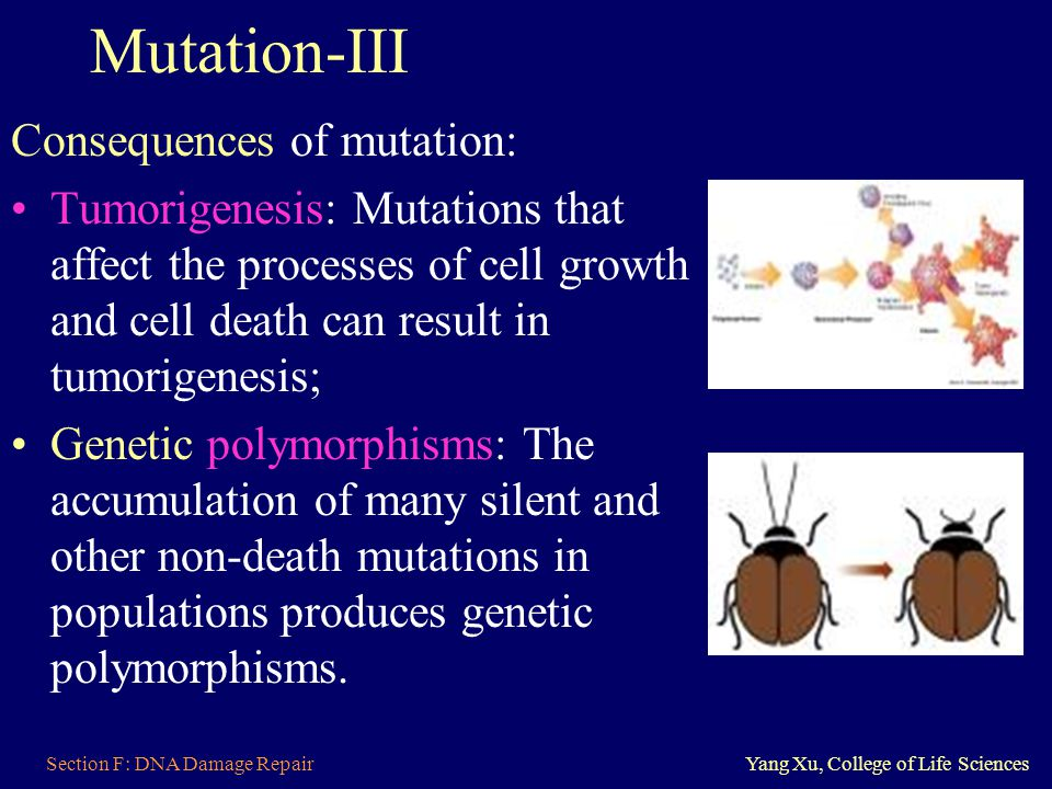 Section F: DNA Damage RepairYang Xu, College of Life Sciences Mutation-III Consequences of mutation: Tumorigenesis: Mutations that affect the processe