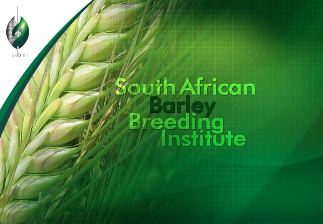 SABBI Barley Program ●SMART breeding (Selection with Markers and Advanced Reproductive Technologies) ●Conventional breeding ●Doubled haploid production ●Marker assisted selection