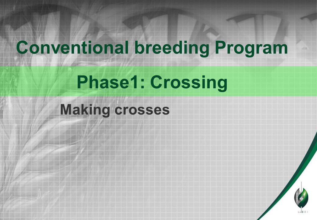 Making crosses Conventional breeding Program Phase1: Crossing