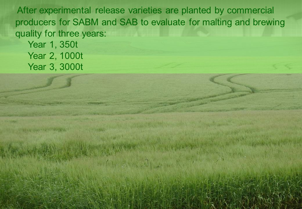 After experimental release varieties are planted by commercial producers for SABM and SAB to evaluate for malting and brewing quality for three years: Year 1, 350t Year 2, 1000t Year 3, 3000t