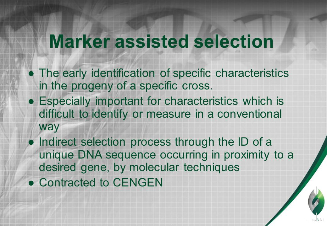 Marker assisted selection ●The early identification of specific characteristics in the progeny of a specific cross.