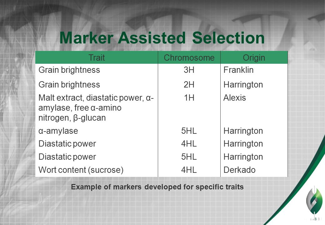 Marker Assisted Selection TraitChromosomeOrigin Grain brightness3HFranklin Grain brightness2HHarrington Malt extract, diastatic power, α- amylase, free α-amino nitrogen, β-glucan 1HAlexis α-amylase5HLHarrington Diastatic power4HLHarrington Diastatic power5HLHarrington Wort content (sucrose)4HLDerkado Example of markers developed for specific traits