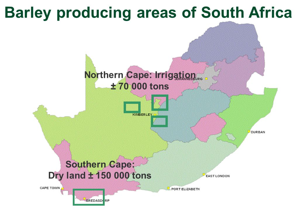 Southern Cape: Dry land ± 150 000 tons Northern Cape: Irrigation ± 70 000 tons Barley producing areas of South Africa