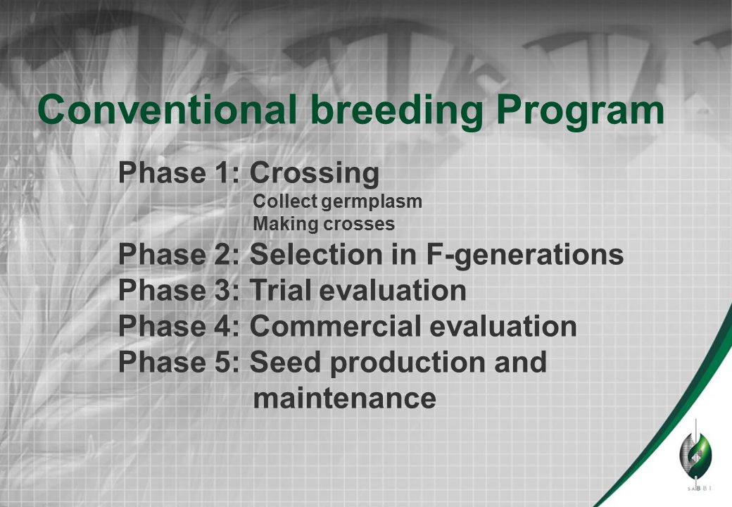 Conventional breeding Program Phase 3: Trial evaluation