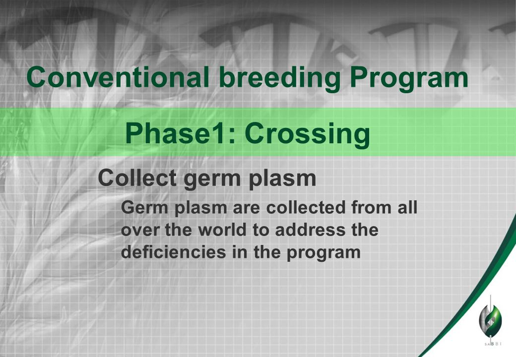 Doubled haploid production ●The production of true breeding lines within one year to shorten the release time of new cultivars with three to four years ●F1 seed (and sometimes F2 seed) from selected crosses are used to produce Doubled haploid plants