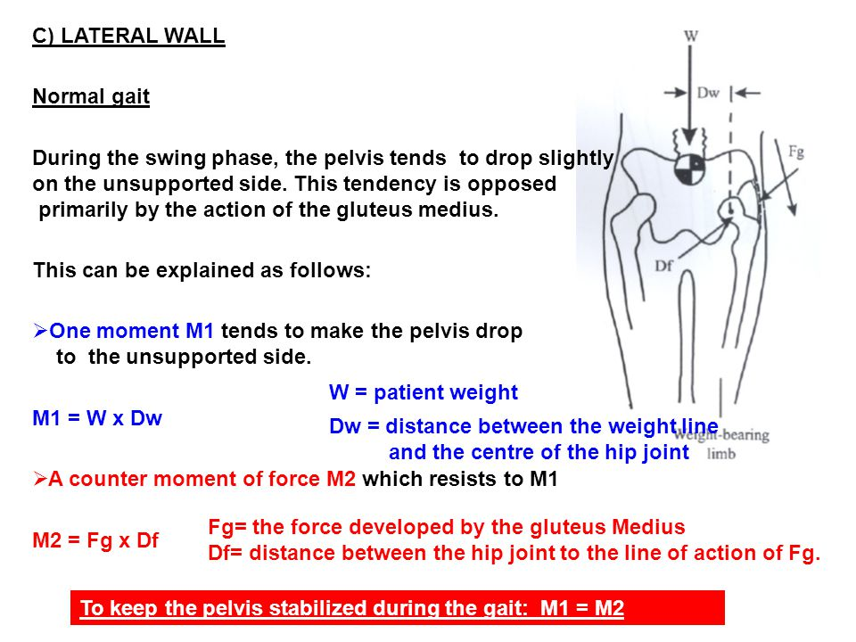 C) LATERAL WALL Normal gait During the swing phase, the pelvis tends to drop slightly on the unsupported side.