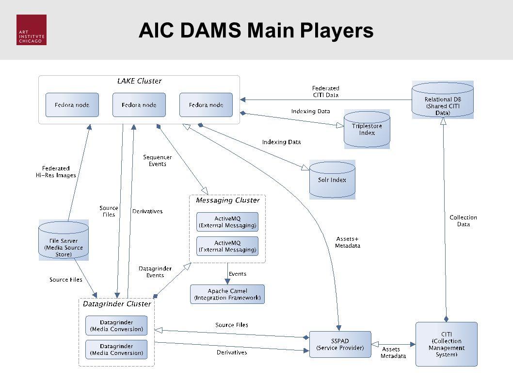 AIC DAMS Main Players