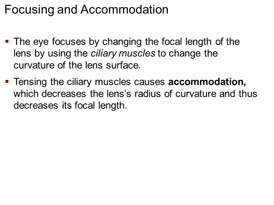 Focusing and Accommodation  The eye focuses by changing the focal length of the lens by using the ciliary muscles to change the curvature of the lens