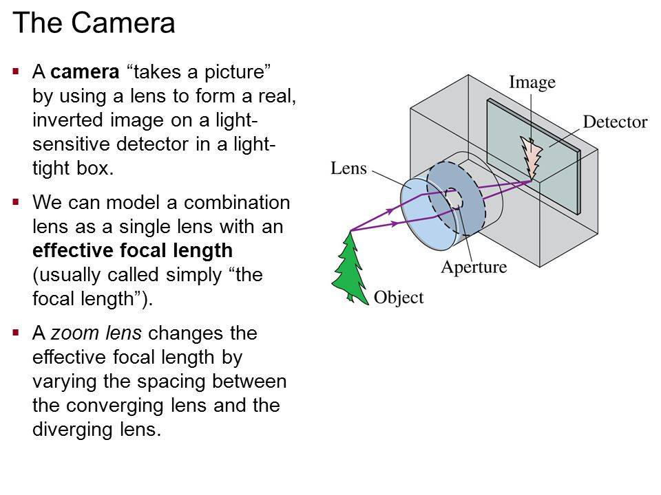 """The Camera  A camera """"takes a picture"""" by using a lens to form a real, inverted image on a light- sensitive detector in a light- tight box.  We can"""
