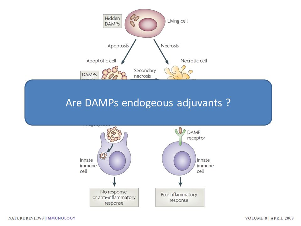 Are DAMPs endogeous adjuvants