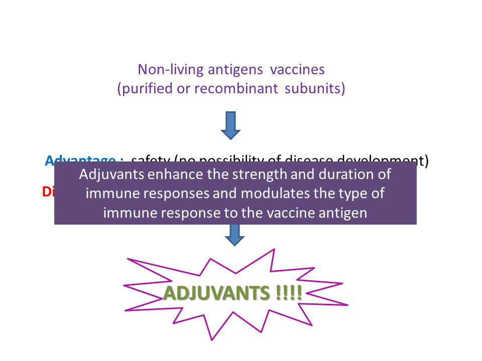 Non-living antigens vaccines (purified or recombinant subunits) Advantage : safety (no possibility of disease development) ADJUVANTS !!!.