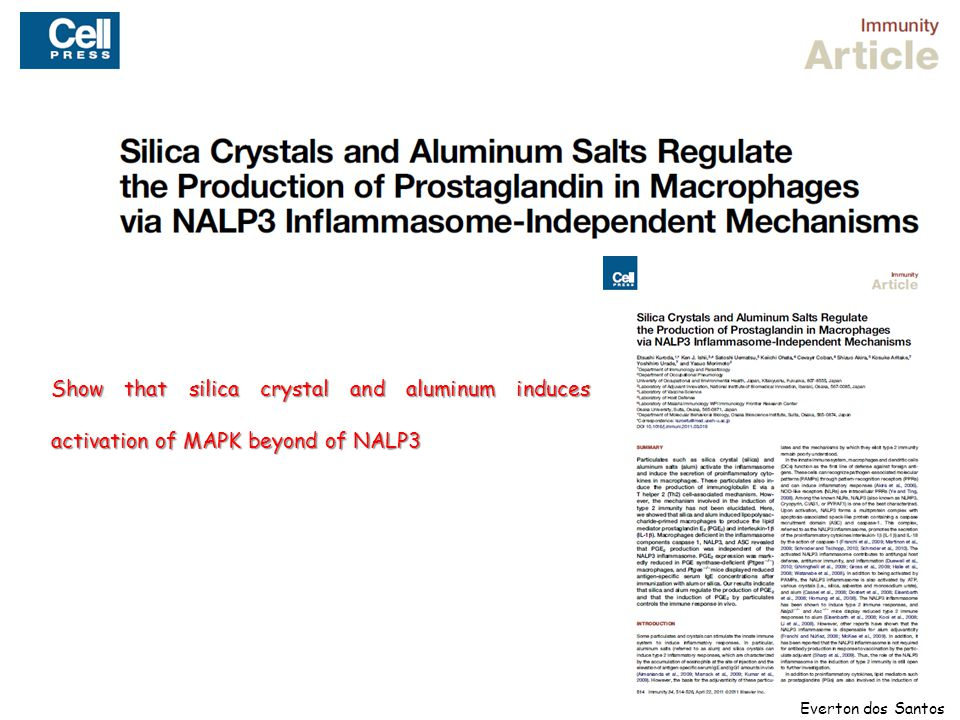 Show that silica crystal and aluminum induces activation of MAPK beyond of NALP3 Everton dos Santos
