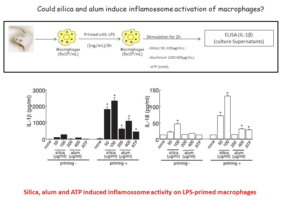 Could silica and alum induce inflamossome activation of macrophages.