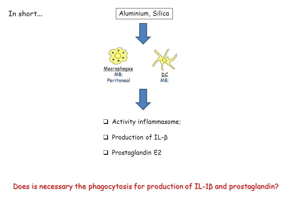 Aluminium, Silica  Activity inflammasome;  Production of IL-β  Prostaglandin E2 MacrophagesMB;Peritoneal DCMB; In short...