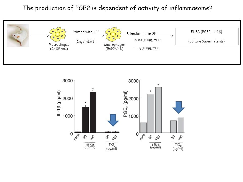 The production of PGE2 is dependent of activity of inflammasome.