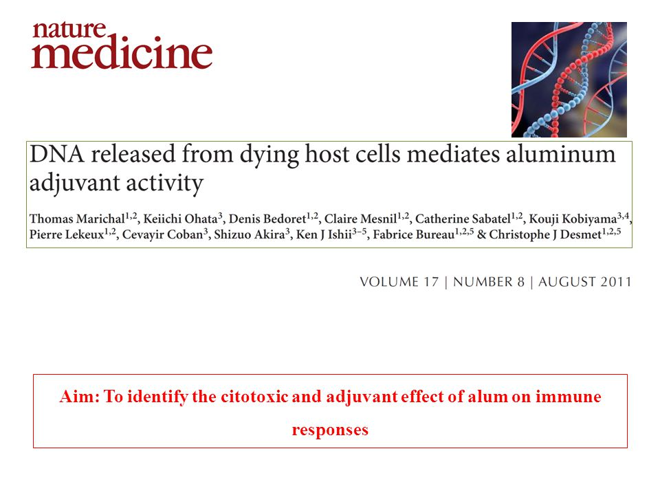 Aim: To identify the citotoxic and adjuvant effect of alum on immune responses