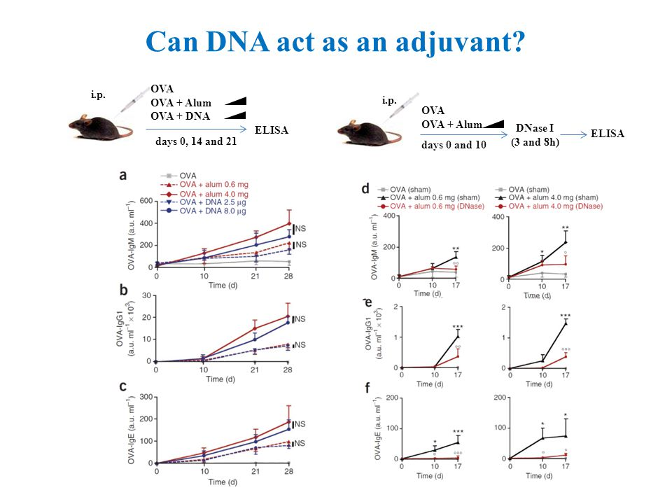 Can DNA act as an adjuvant. ELISA i.p. OVA OVA + Alum OVA + DNA days 0, 14 and 21 ELISA i.p.