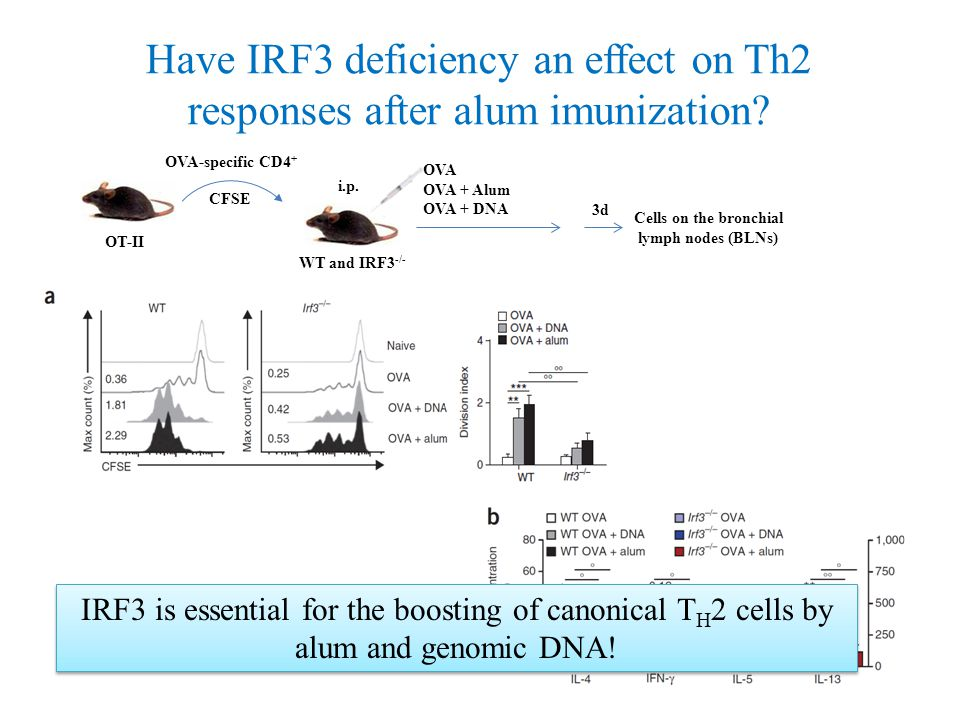Have IRF3 deficiency an effect on Th2 responses after alum imunization.
