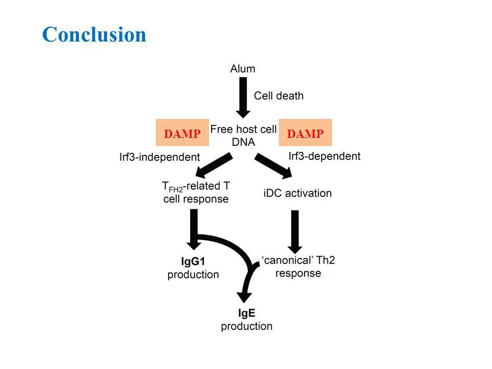 Conclusion DAMP