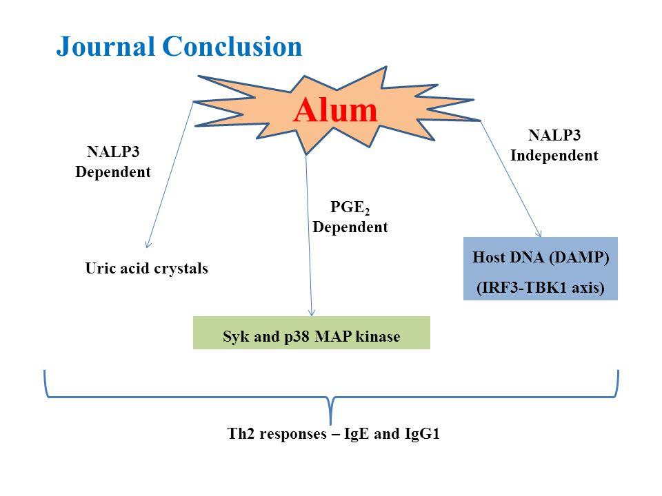 Journal Conclusion Alum NALP3 Independent NALP3 Dependent PGE 2 Dependent Host DNA (DAMP) (IRF3-TBK1 axis) Syk and p38 MAP kinase Uric acid crystals Th2 responses – IgE and IgG1