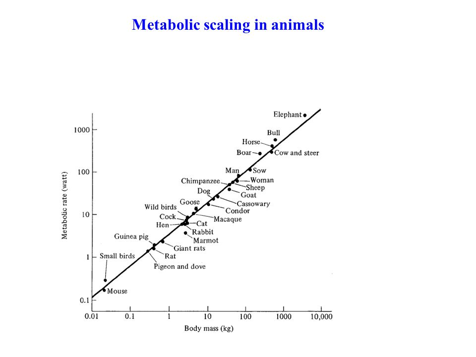 Metabolic scaling in animals