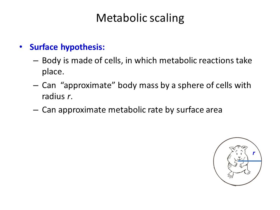 """Metabolic scaling Surface hypothesis: – Body is made of cells, in which metabolic reactions take place. – Can """"approximate"""" body mass by a sphere of c"""