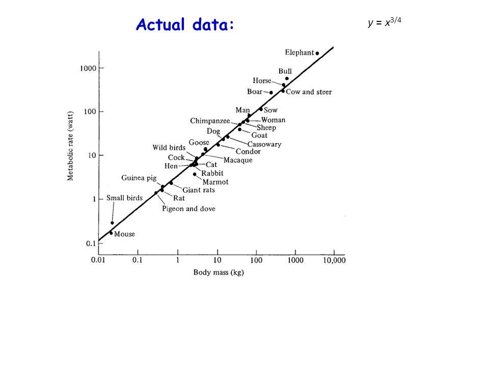 Actual data: y = x 3/4