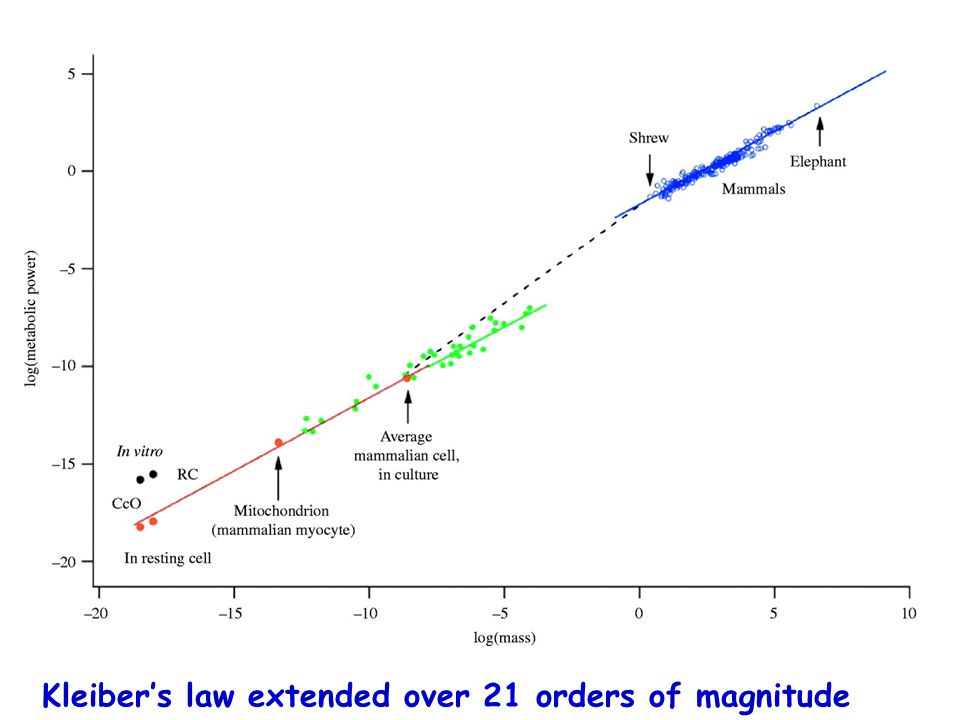 Kleiber's law extended over 21 orders of magnitude