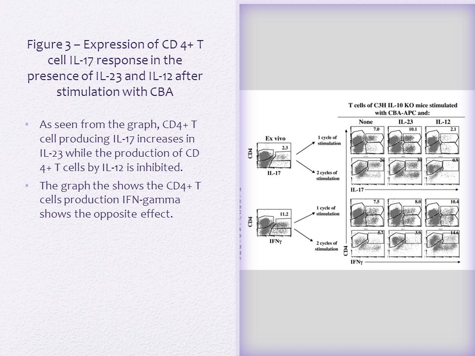 Figure 4 In order to test whether the production of IL-23 and IL-12p70 were driven by the CD 4+ T cells, the cytokines were plated in cultures that contained dendritic cell and the pathogenic CD 4+ T cell strain.