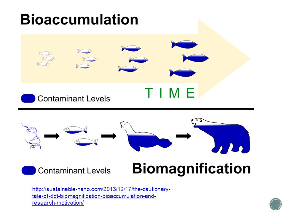 http://sustainable-nano.com/2013/12/17/the-cautionary- tale-of-ddt-biomagnification-bioaccumulation-and- research-motivation/