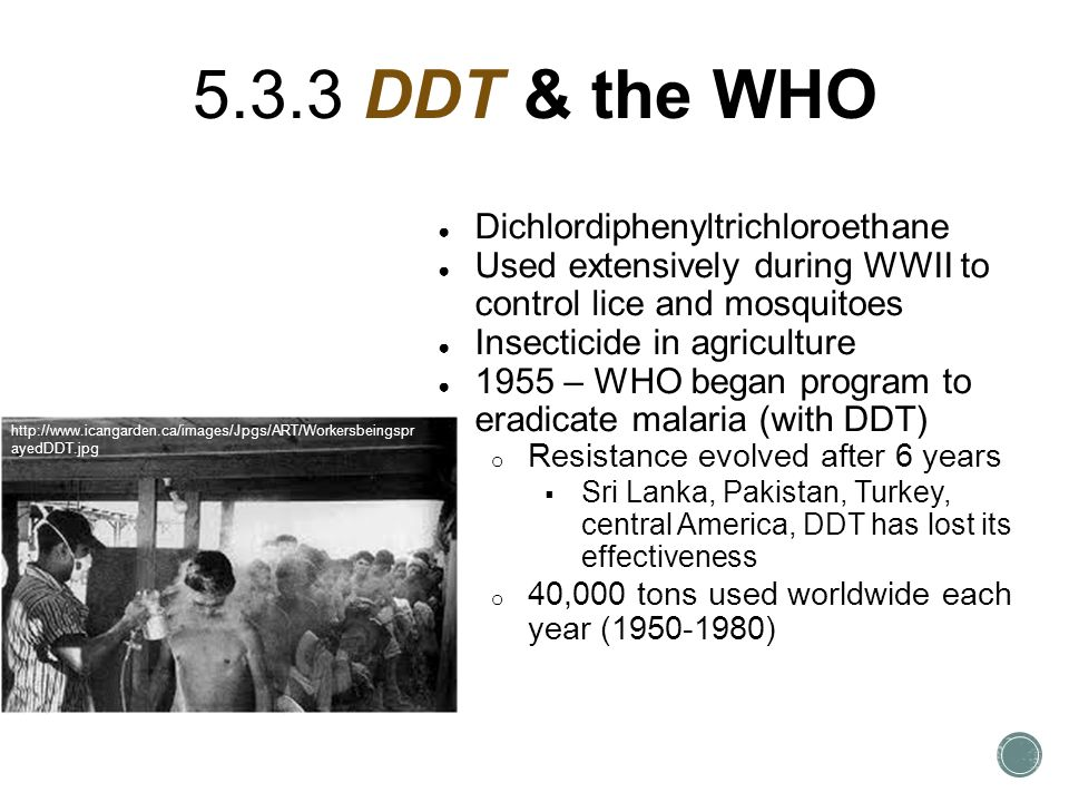5.3.3 DDT & the WHO ● Dichlordiphenyltrichloroethane ● Used extensively during WWII to control lice and mosquitoes ● Insecticide in agriculture ● 1955 – WHO began program to eradicate malaria (with DDT) o Resistance evolved after 6 years  Sri Lanka, Pakistan, Turkey, central America, DDT has lost its effectiveness o 40,000 tons used worldwide each year (1950-1980) http://www.icangarden.ca/images/Jpgs/ART/Workersbeingspr ayedDDT.jpg