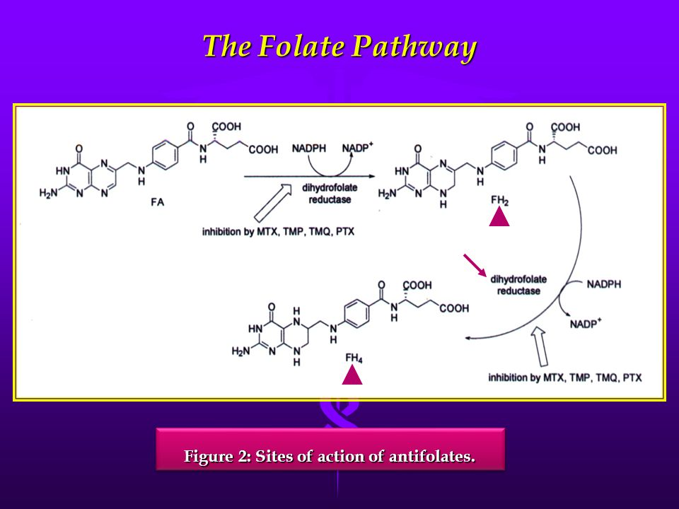 Inhibitors of Dihydrofolate Reductase
