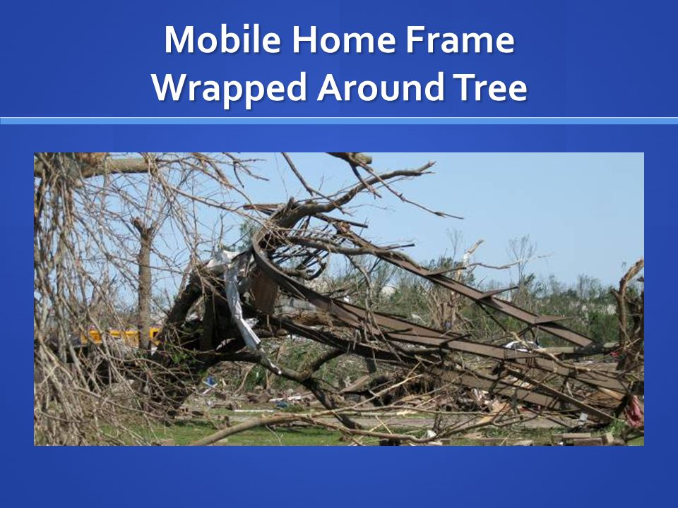 Mobile Home Frame Wrapped Around Tree