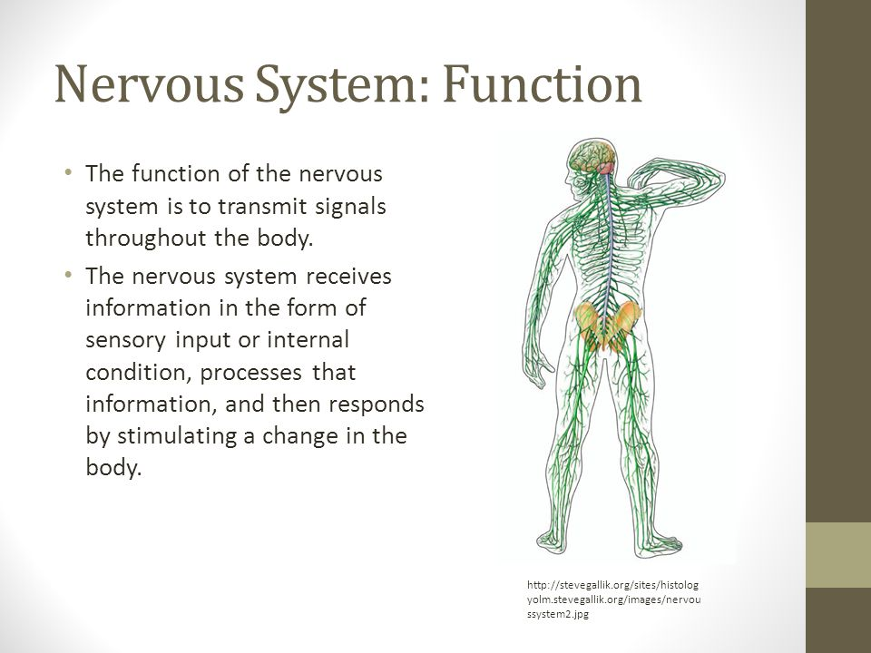 Nervous System: Function The function of the nervous system is to transmit signals throughout the body.