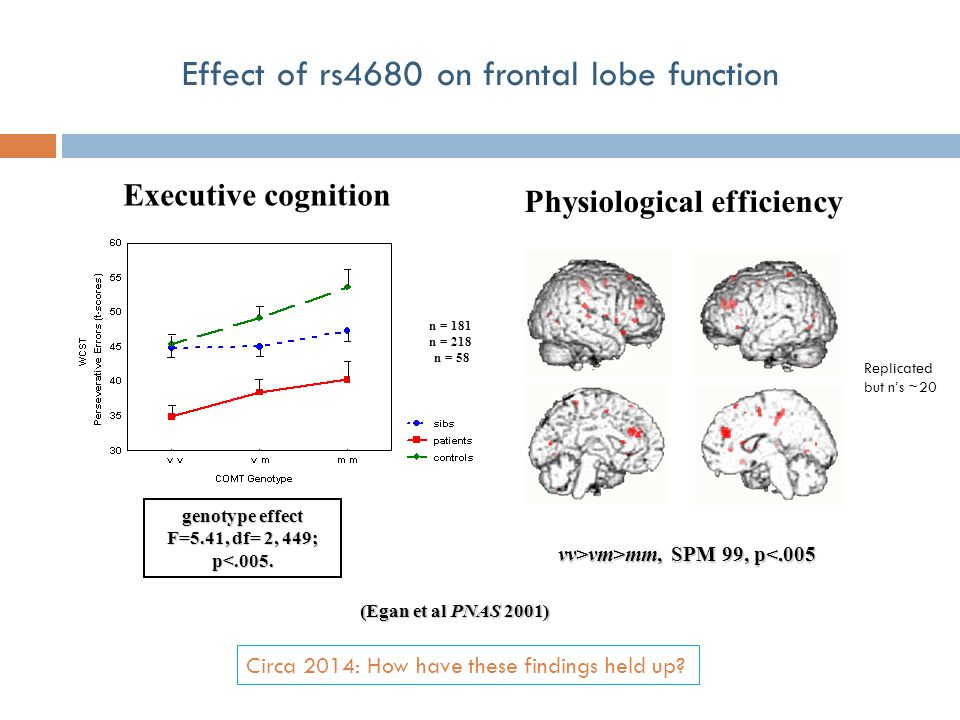 genotype effect F=5.41, df= 2, 449; p<.005. Executive cognition Effect of rs4680 on frontal lobe function (Egan et al PNAS 2001) n = 218 n = 181 n = 5