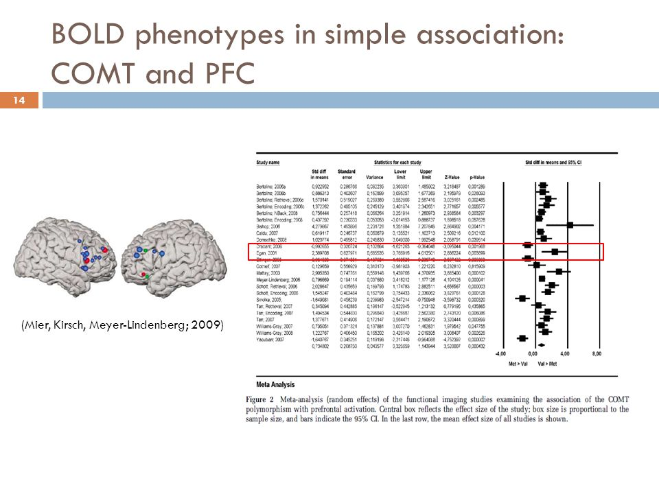 BOLD phenotypes in simple association: COMT and PFC 14 (Mier, Kirsch, Meyer-Lindenberg; 2009)