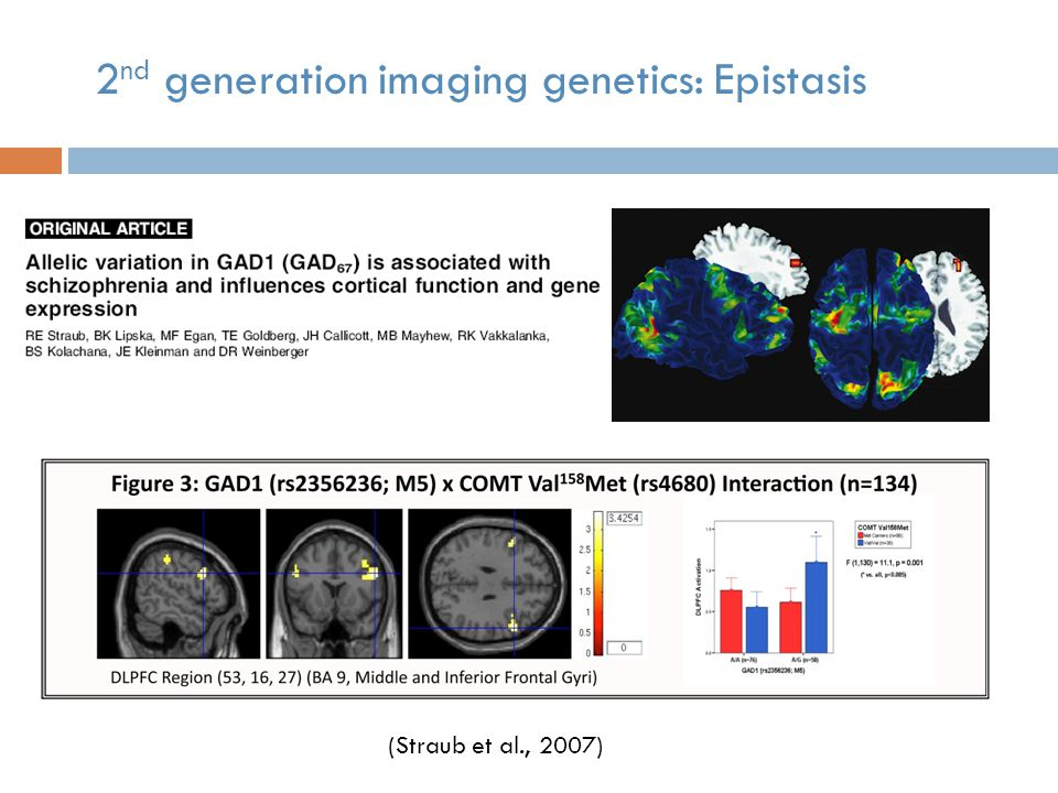 (Straub et al., 2007) 2 nd generation imaging genetics: Epistasis