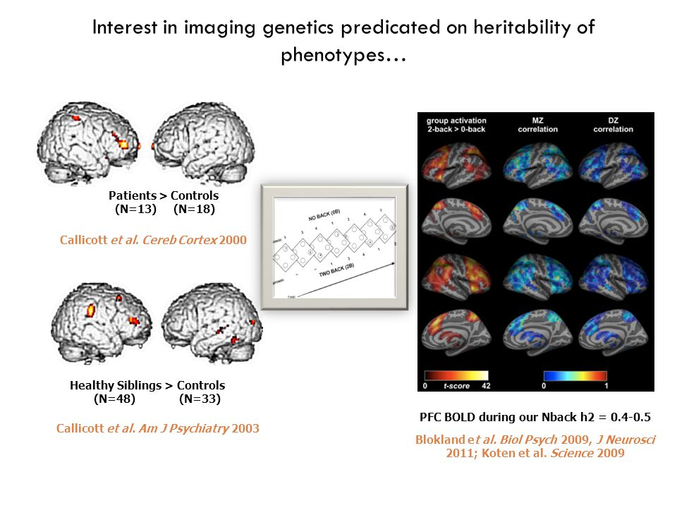 Further musing…  Multimodal data, multimodal analysis  fMRI phenotypes are not independent  Aspects within each task representing individual 'positive manifold'  Is heritability about this general shared variance or specific task aspects.