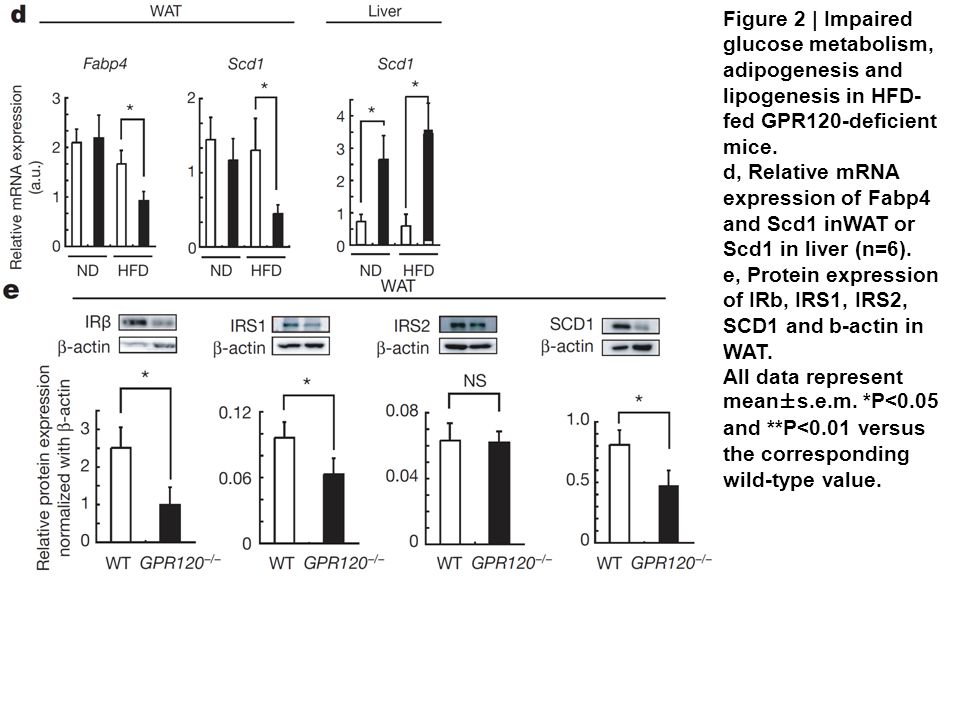 Figure 2 | Impaired glucose metabolism, adipogenesis and lipogenesis in HFD- fed GPR120-deficient mice.