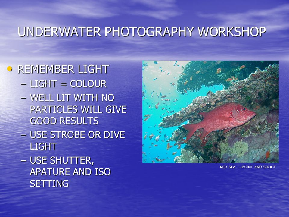 UNDERWATER PHOTOGRAPHY WORKSHOP REMEMBER LIGHT REMEMBER LIGHT –LIGHT = COLOUR –WELL LIT WITH NO PARTICLES WILL GIVE GOOD RESULTS –USE STROBE OR DIVE LIGHT –USE SHUTTER, APATURE AND ISO SETTING RED SEA – POINT AND SHOOT