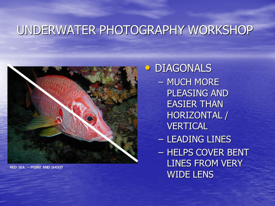UNDERWATER PHOTOGRAPHY WORKSHOP DIAGONALS DIAGONALS –MUCH MORE PLEASING AND EASIER THAN HORIZONTAL / VERTICAL –LEADING LINES –HELPS COVER BENT LINES FROM VERY WIDE LENS RED SEA – POINT AND SHOOT