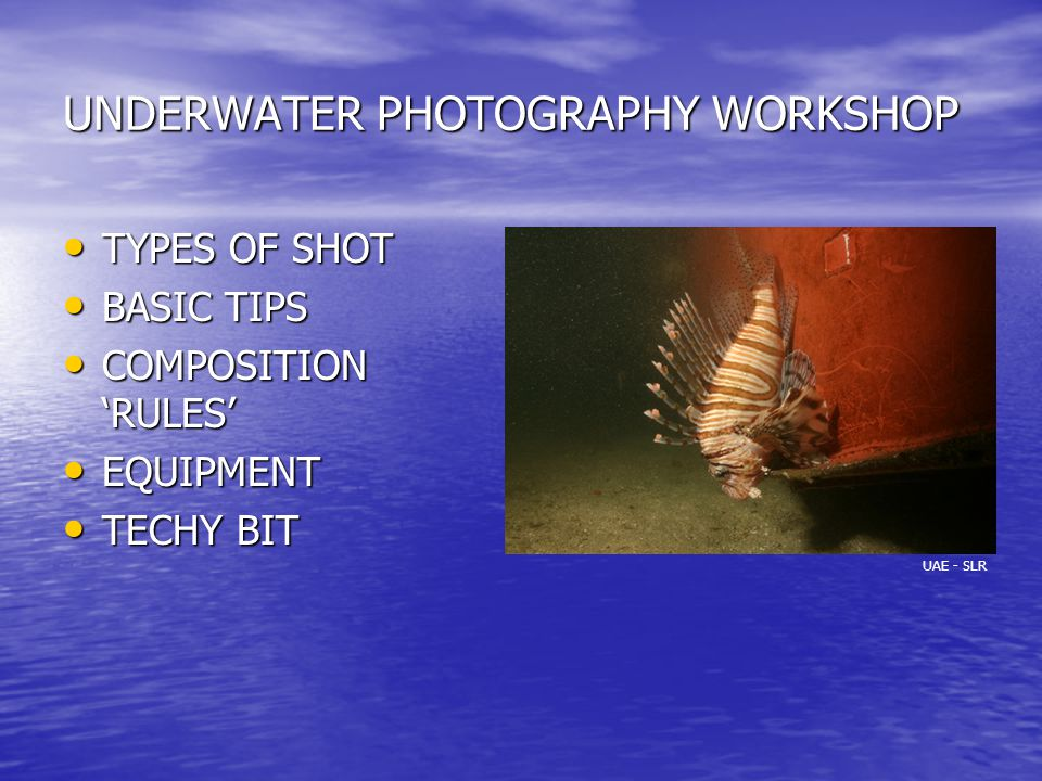 UNDERWATER PHOTOGRAPHY WORKSHOP TYPES OF SHOT TYPES OF SHOT BASIC TIPS BASIC TIPS COMPOSITION 'RULES' COMPOSITION 'RULES' EQUIPMENT EQUIPMENT TECHY BIT TECHY BIT UAE - SLR